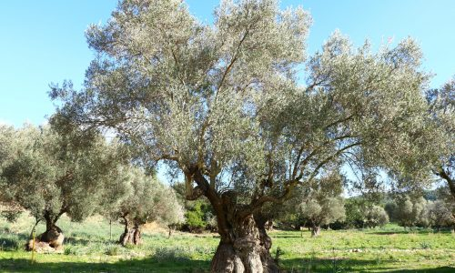 Frühling in Mallorca