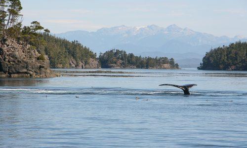 Vancouver_Island_12-117