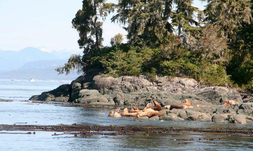 Vancouver_Island_15-141